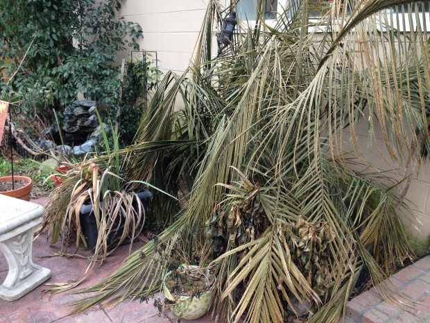 Curb appeal when selling - frozen plants in New Orleans
