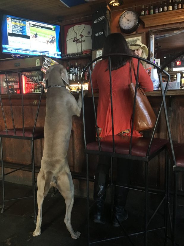 Dog friendly New Orleans bars