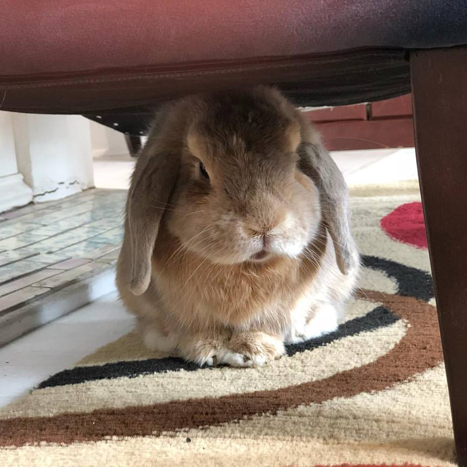 The official Crescent City Living bunny says to help Zeus' Place