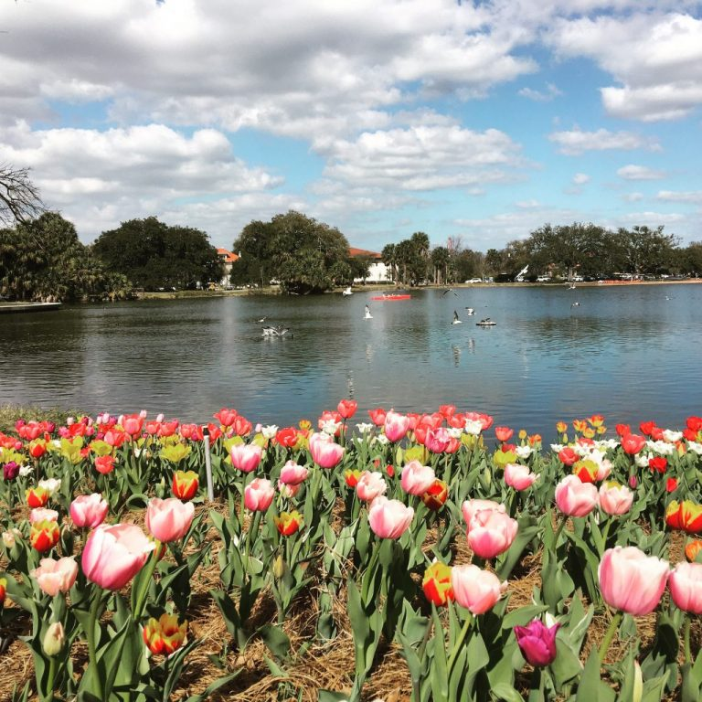 tulips in new orleans city park
